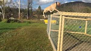 Flying pitbull!! Worlds most athletic XXL!! GHOSTFACE ...