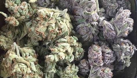 popular purple cannabis strains  chill bud