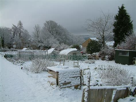 January Allotment Tips  Suttons Gardening Grow How