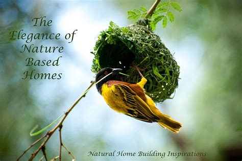 natural home building examples nature based homes