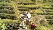採茶車體驗 - YouTube