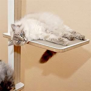 Katzenzubehör Auf Rechnung : birmakatze kratzbaum home 1 bildergalerie stylecats design kratzbaum ~ Themetempest.com Abrechnung