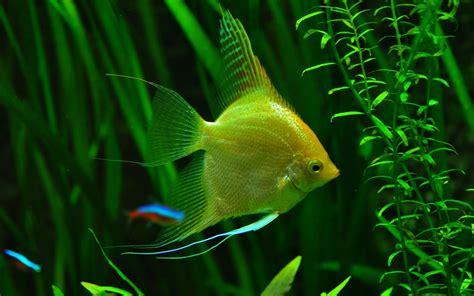 Fonds d'écran Aquarium Poissons gratuits