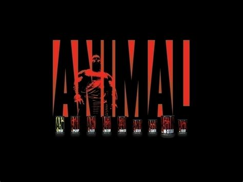 Animal Pak Wallpaper - animal pak wallpaper wallpapersafari