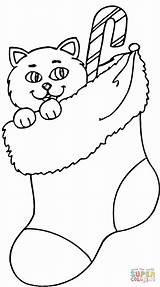 Coloring Stocking Christmas Cat Pages Printable Stockings Sock Clipart Printables Easy Kitten Paper Santa Disney Drawing sketch template