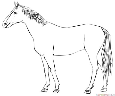draw  realistic horse standing step  step