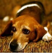Sad Puppy Dog Eyes   o...Sad Puppy