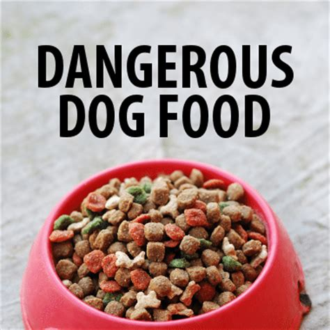 table food for dogs dr oz xylitol bones table scraps your dog should never eat
