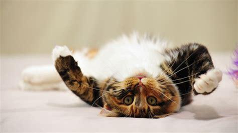 【1920×1080】 猫の壁紙 【フルhd/cat/wallpaper】