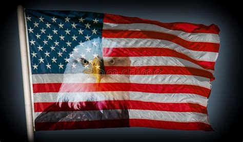 595 American Flag Bald Eagle Photos - Free & Royalty-Free ...
