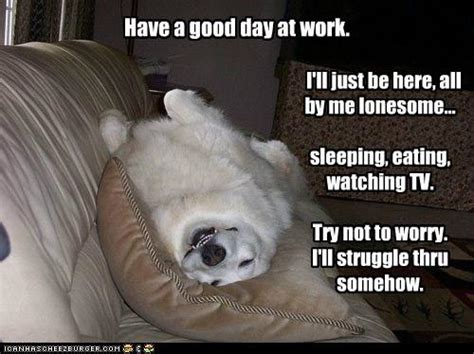 Nice Day Meme - having a good day at work funny memes google search dogs pinterest work funnies funny