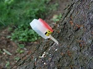Грибок ногтей и денежное дерево