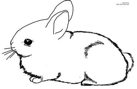 printable bunny rabbit coloring pages  kids