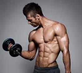 筋肉 に対する画像結果