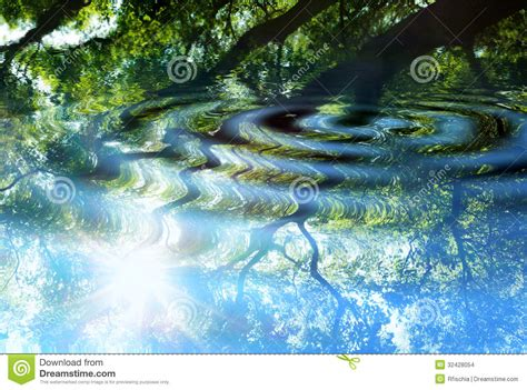 reflection  forest  water stock photo image  leaf