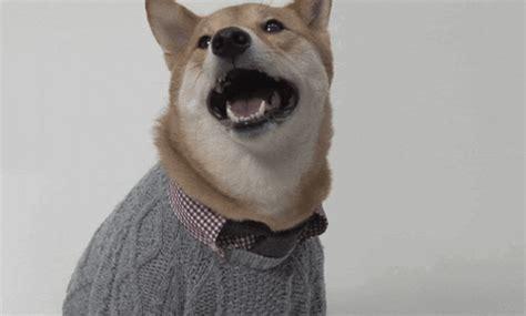 fashion dress  gif  menswear dog find share  giphy