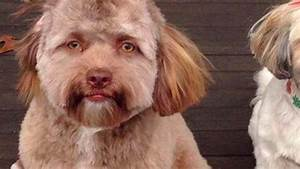 Behold A Dog With A Human Face Exists And He39s Freaking