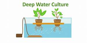 The Ultimate Guide On Deep Water Culture Systems