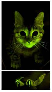 glow cats spectre footnotes