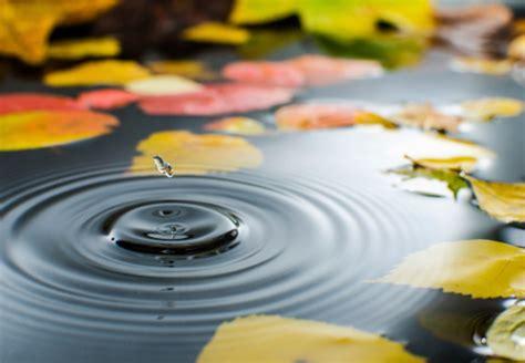 Gräser Im Garten Winterfest Machen by So Machen Sie Ihren Teich Winterfest Umfassende Tipps