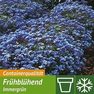 Ahrens Und Sieberz Versand : blaukissen blau online kaufen bei ahrens sieberz ~ Lizthompson.info Haus und Dekorationen