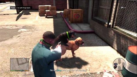 Pet Dog Chop Funny Moment