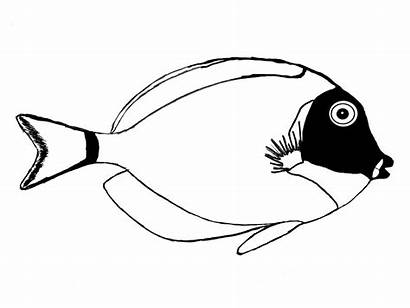 Powder Tang Surgeonfish Fish Outline Surgeon Vector