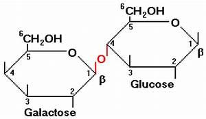 lactose molecule   Dairy Council of Utah Nevada