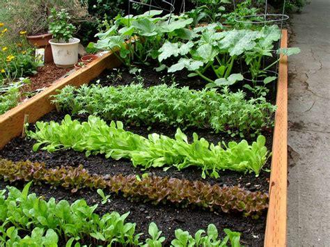 photos of vegetable gardens green thumb gardening series spring vegetable gardening harris county public library