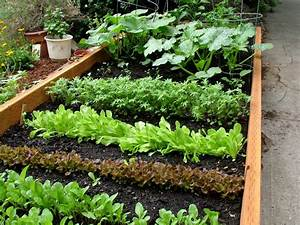 Green thumb gardening series spring vegetable gardening for Spring vegetable garden