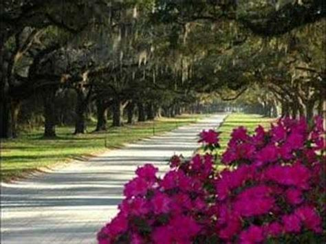17 best images about carolina on