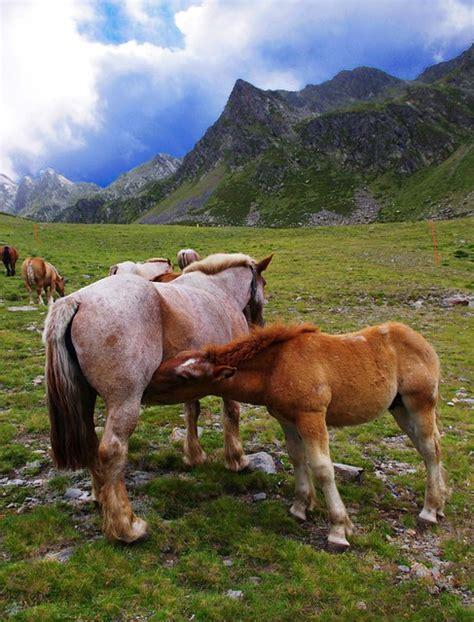 mammals horses