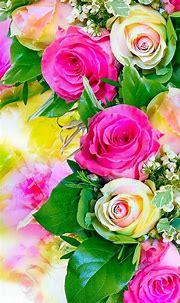 Free download Rose Flower Wallpaper Hd Mobile Wallpapers ...