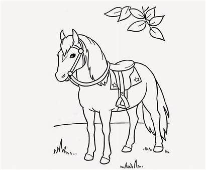 Horse Coloring Drawing Colour Wallpapers