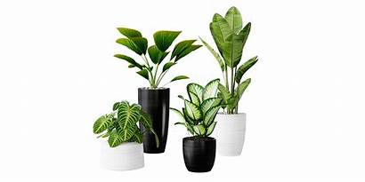 Plants Pots Realistic Interior Documentation Ratings Faq