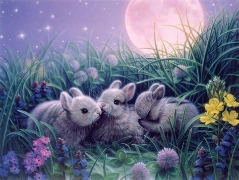 sweet  bunnies  kirk reinhert pictures