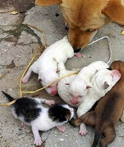 Dog gives birth to cat (2 pics) | Amazing Creatures