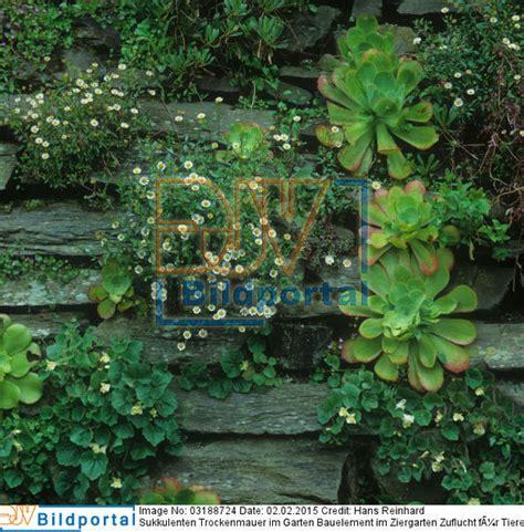 holzbrunnen für garten details zu 0003188724 trockenmauer im garten bauelement