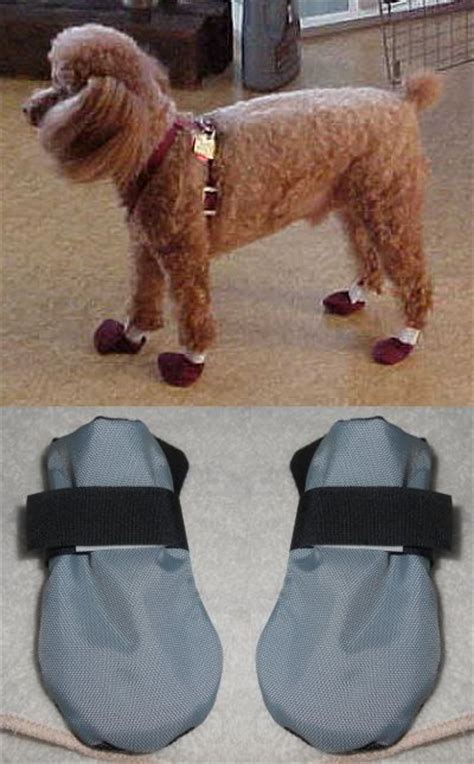 comfy dog boots shoes stylish durable protective dog