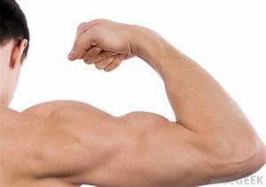 What is a Bicep? (with pictures)