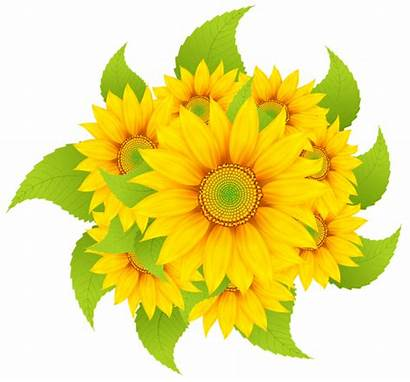 Sunflowers Clipart Decoration Transparent Flowers Sunflower Clip