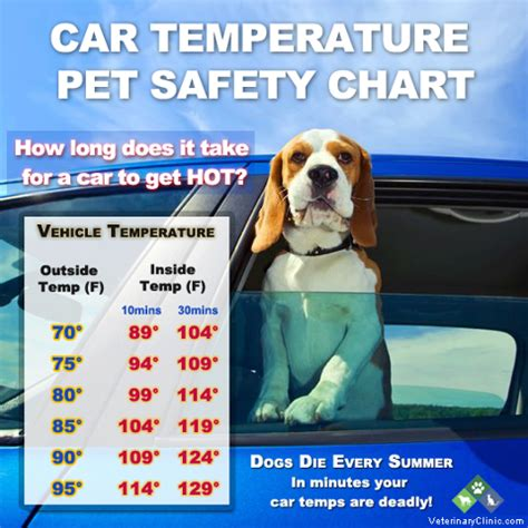 will a heat l keep a dog warm car temperature pet safety chart make sure to keep your