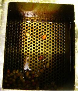 Popcorn Machines Minit Pop  U