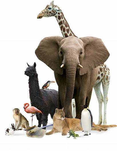 Animals Exotic Animal Species Feed Let Special