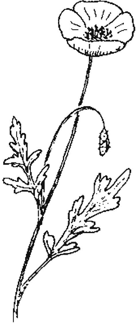 papier pour cuisine coloriage fleurs et plantes coquelicots à colorier allofamille