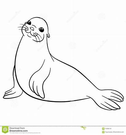 Seal Coloring Fur Smiles Pages