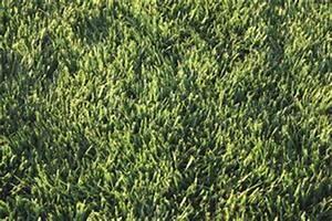 Comment Empecher L Herbe De Pousser Dans Le Gravier : comment faire pousser l 39 herbe dans le sable ou gravier ~ Dailycaller-alerts.com Idées de Décoration