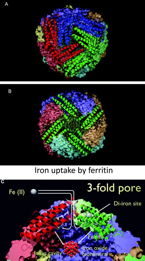 serum ferritin is an important inflammatory disease marker