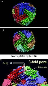 Serum Ferritin Is An Important Inflammatory Disease Marker