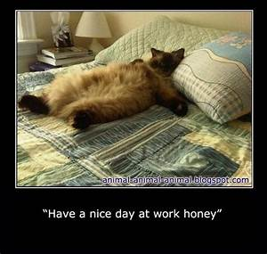 have a nice day at work honey. | Funny Animals | Pinterest ...